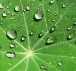 leaf_raindrops